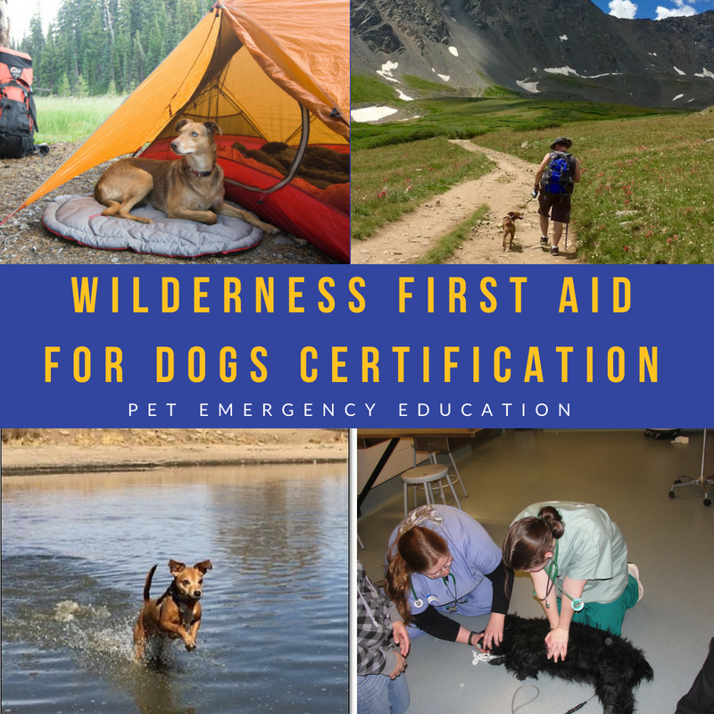 111018 10am 1pm K9wildaid Wilderness First Aid For Dogs