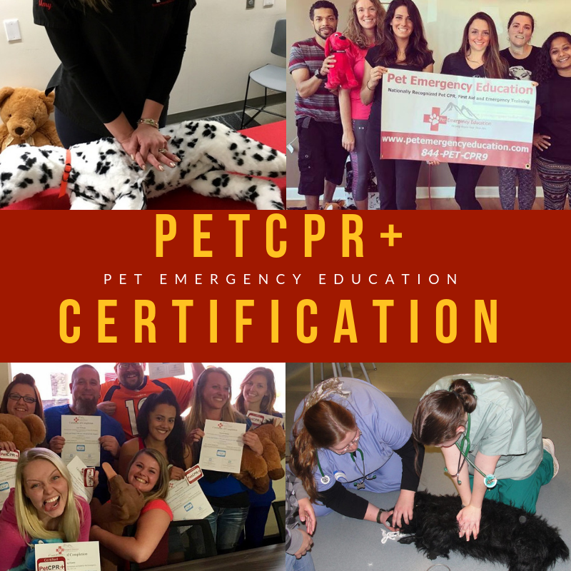 11/3/18 1-4pm PetCPR+ Certification Class at The Dog Sitter LLC Las ...